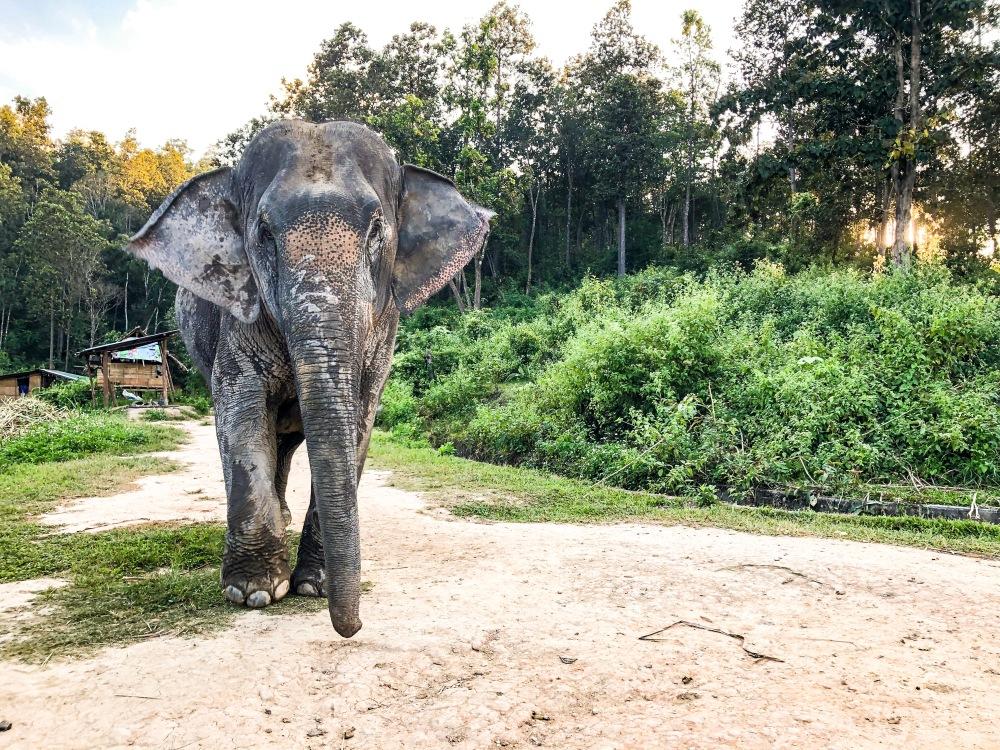 Elephant Sanctuary Chiang Mai Thailand Travelanyway cover