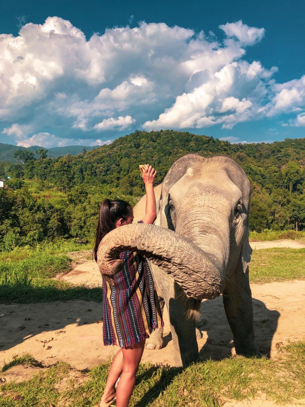 Elephant Sanctuary Feeding Chiang Mai Thailand Travelanyway