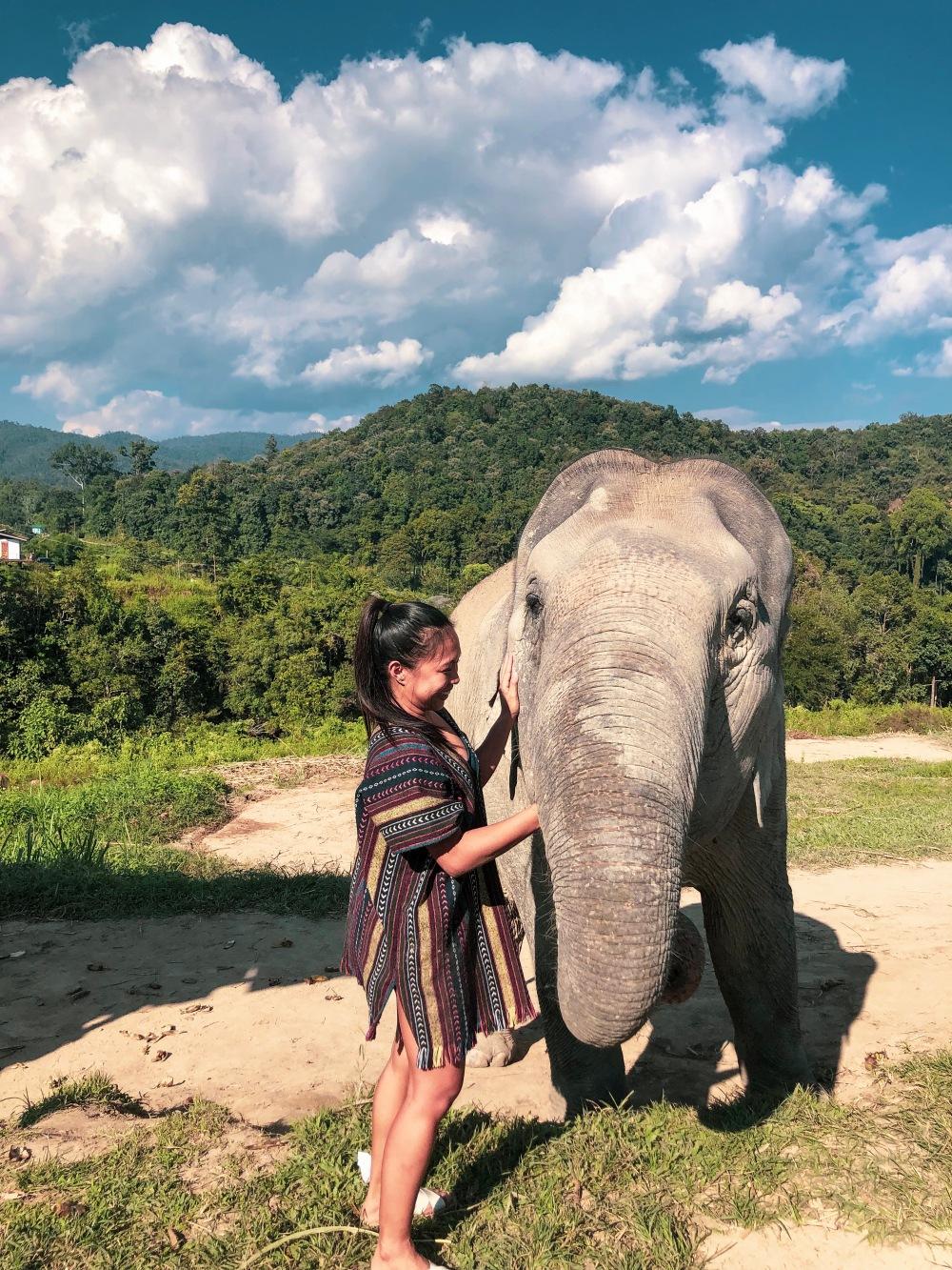 Elephant Sanctuary Feeding Chiang Mai Thailand Travelanyway2